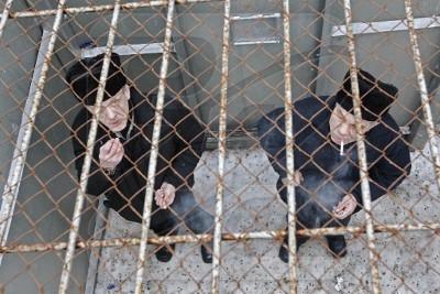 Пожизненное лишение свободы как вид уголовного наказания
