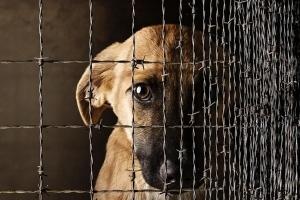 Жестокое обращение с животными: статья 245 УК РФ